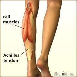 Pulled Calf Diagram