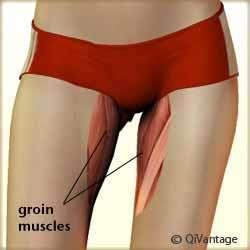 Groin Pull Diagram