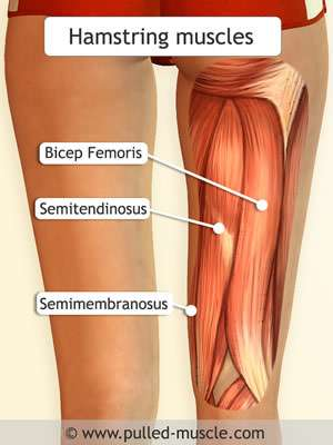 Hamstring Injury Essentials - Muscle Pull | Muscle Pull